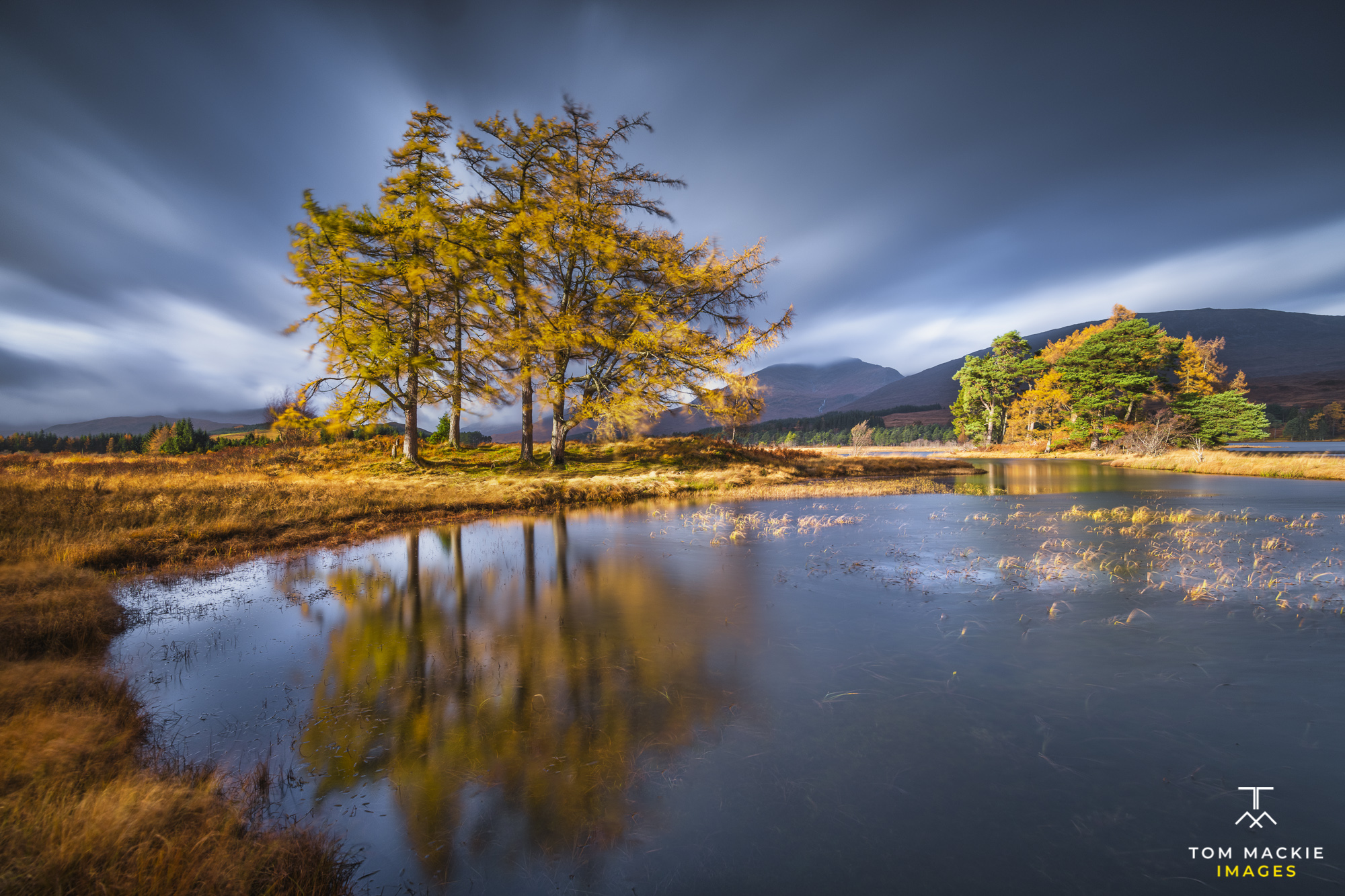 Larch Trees Reflecting in Loch Tulla in Autumn, Argyll and Bute, Scotland