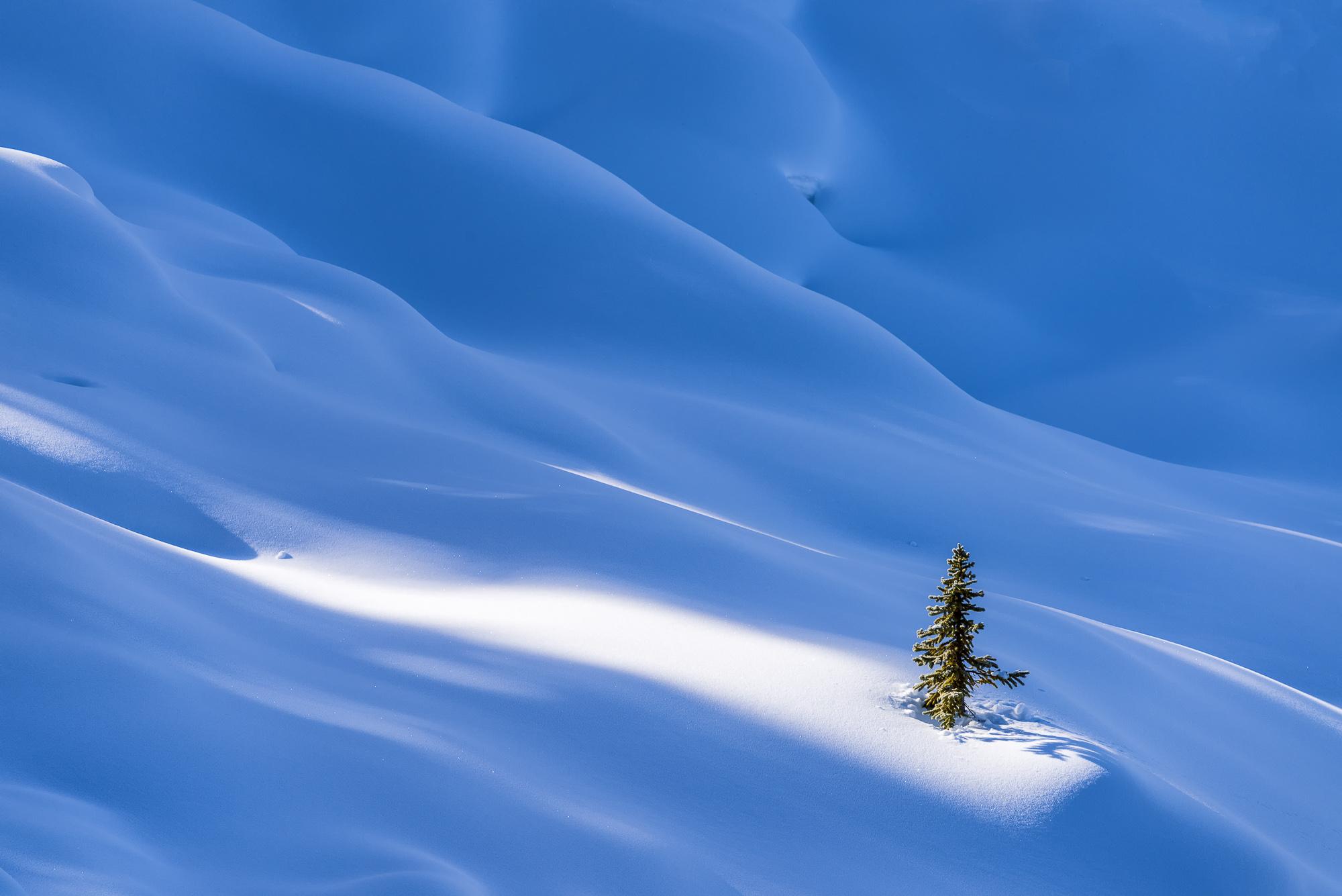 Single Pine Tree in Winter, Banff National Park, Aberta, Canada